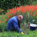 Czy warto kupić ogródek działkowy?